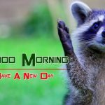 Best Animal Good Morning Images Download
