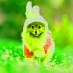 Attractive Whatsapp Dp Images wallpaper photo hd download