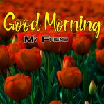 Beautiful Flowers Good Morning Photo