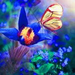 Beautiful Whatsapp DP Images