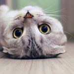 Best Funny Cat Photo Free Download