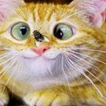 Best Funny Cat Wallpape Images