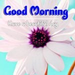 Best Good Morning Images pictures free hd
