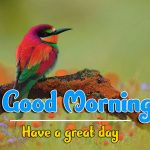 Best Good Morning Images wallpaper free hd