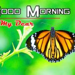 Best Happy Good Morning Photo Hd