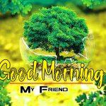 Best Happy Good Morning Photo Pics