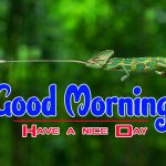 Best Nature Good Morning Photo Pics