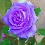 Boys & Girls Whatsapp DP Profile Images photo pics free hd