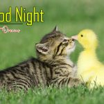 All Cute Good Night photo Free Download