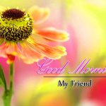 Flower Good Morning Wallpaper Download