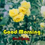 Flower Good Morning Pics Free Download for Facebook