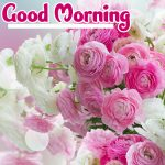 Flower Good Morning Images pictures pics hd