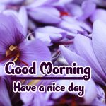 Flower Good Morning Images pictures hd download