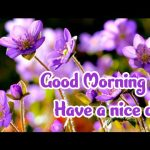 Flower Good Morning Images pictures free hd
