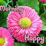 Flower Good Morning Images pics hd