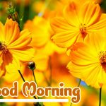 Flower Good Morning Images photo download
