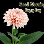 Flower Good Morning Images photo hd download