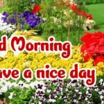 Flower Good Morning Images pictures pics hd download