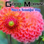Flowers Good Morning Wallpaper For Whatsapp