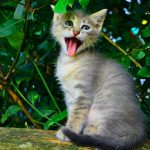 Free Funny Cat Free Pics Images