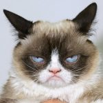 Free Funny Cat Latest Images Dowload