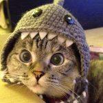 Free Funny Cat Wallpaper Images Pics