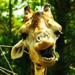 Funny Animal Free Download Pics