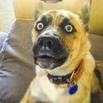 Funny Animal Images Photo Free Download