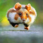Funny Animal Images hd Download