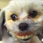 Funny Animal Photo Free