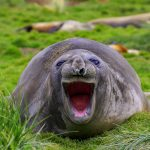 Funny Animal Photo Images Free Download