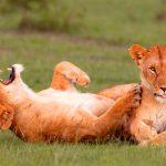 Funny Animal Pics Free Download