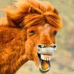 Funny Animal Pics Free wallpaper