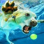 Funny Animal Wallpaper Free Download