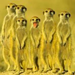 Funny Animal Wallpaper Hd Free Download