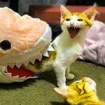 Funny Animal Wallpaper Pics Free Download