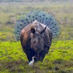 Funny Animal Walpaper