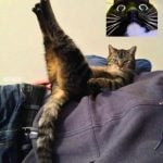 Funny Cat Free Download