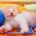 Funny Cat Free Download Hd