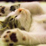 Funny Cat Free Download Pics