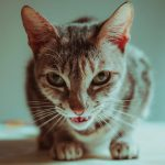 Funny Cat Free Images Pictures