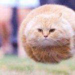 Funny Cat Free Wallpaper Images hd