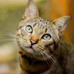 Funny Cat Hd Images Photo