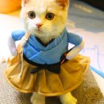 Funny Cat Latest Images