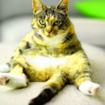 Funny Cat Pics Fpr Facebook