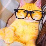 Funny Cat Wallpaper Images Hd