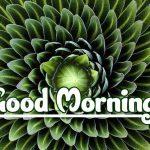 Good Morning Nature Images pics hd download