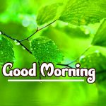 Good Morning Nature Images photo for hd