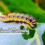 Good Morning Nature Images photo hd