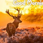 Good Morning Nature Images pictures